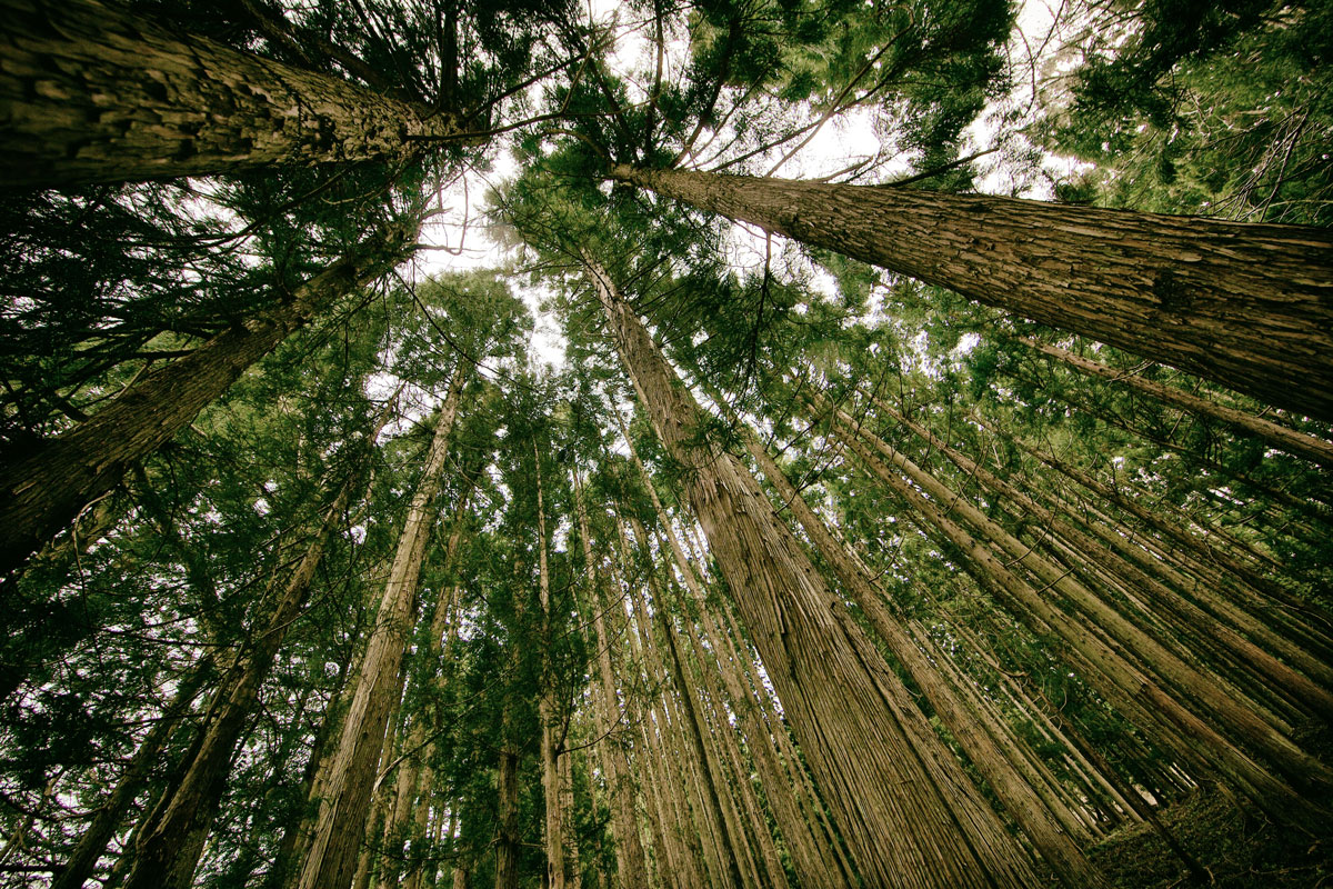 Forest Wanderings